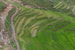Watershed and paddy rice terraces in Timur Sein village in Nepal
