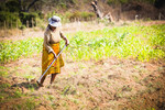 Farmer removing weeds from her maize crop, Chochocho Irrigation Scheme located in the Inkomati Catchment, South Africa