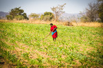 Farmer with her maize crop, Chochocho Irrigation Scheme located in the Inkomati Catchment, South Africa