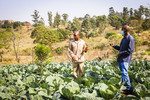Farmer and IWMI researcher discussion on cabbage crop production and water use, White River, South Africa