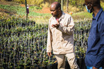 Farmer and IWMI researcher discussion on the grafting of macadamia nut trees at the nursery, White River, South Africa