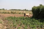 Farm near the town of Meki, Ethiopia.