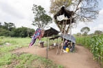 Tree house to protect crop from wild animals