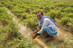 Smiling face of a farmer using groundwater for agriculture