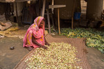 Vegetable farmer sorting out crop