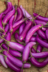 Brinjals plucked from the farm