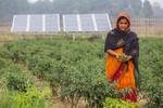 Solar Irrigation