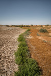Green Bushes separating salty dry soil and plant field
