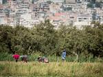 Women harvesting vegetables