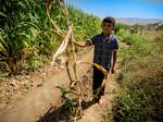 Boy holding a dry corn plant