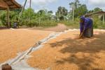 Anuradhapura field visit