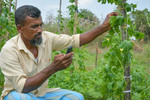 A farmer checking the agro-climate information sent to his phone via SMS as part of IWMI's bundled insurance solutions program.