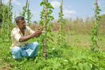 Farmer tending to crops